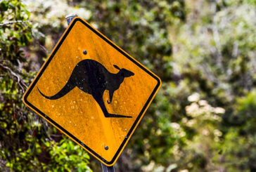 WRC: Se cancela el Rally de Australia por incendios